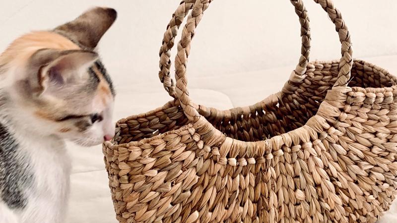 comportamento | adoção de animais | gata | gatos | Marcéli Paulino | Rajah Paulino | sobre adotar um pet | adoção de animais | adotar gatos | dicas para criar gatos | o que você precisa saber sobre gatos | dicas sobre gatos
